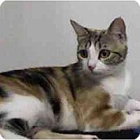 Adopt A Pet :: Isabella - Greenville, SC
