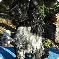 Adopt A Pet :: Peyton - Sugarland, TX