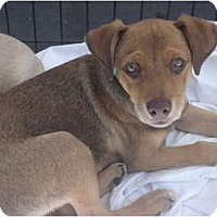 Adopt A Pet :: Pierce - Lake Forest, CA