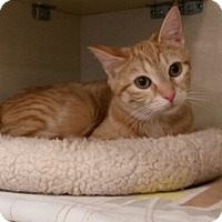 Adopt A Pet :: Claire - Berkeley Hts, NJ