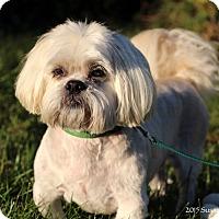 Adopt A Pet :: Riggo - Bedford, VA