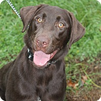 Adopt A Pet :: Polly - Waldorf, MD