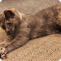 Adopt A Pet :: Carol - Raritan, NJ