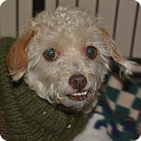 Adopt A Pet :: Hannah - Meridian, ID