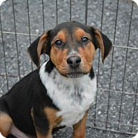 Adopt A Pet :: Thomas - Sunnyvale, CA