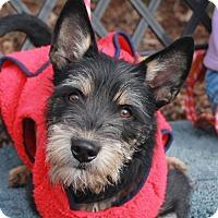 Adopt A Pet :: Roxy - Garfield Heights, OH