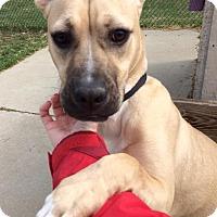 Adopt A Pet :: Asia - Troy, MI