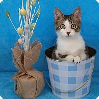 Adopt A Pet :: Jimmy - Elkhorn, WI