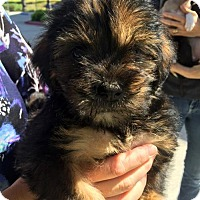 Adopt A Pet :: Hill Pup - Wren - Adopted! - San Diego, CA
