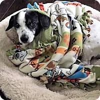 Adopt A Pet :: Arthur - Ft. Lauderdale, FL