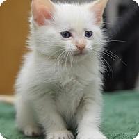 Adopt A Pet :: Elwood - DFW Metroplex, TX