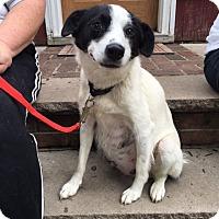 Adopt A Pet :: Willow - Sparta, NJ