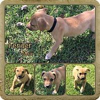 Adopt A Pet :: Fender - pending adoption - Manchester, CT