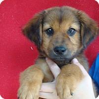 Adopt A Pet :: Fin - Oviedo, FL