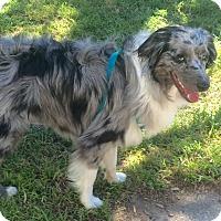 Adopt A Pet :: Murdock - Navarre, FL