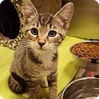 Adopt A Pet :: Beliza - Bensalem, PA