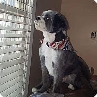 Adopt A Pet :: LIL MAN - Byron, GA