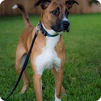 Adopt A Pet :: Goose - Plano, TX