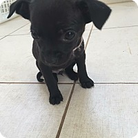 Adopt A Pet :: Sneezy - Lima, PA