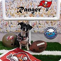 Adopt A Pet :: Ranger - Arcadia, FL