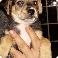 Adopt A Pet :: Willa - Mechanicsburg, PA