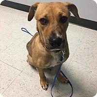 Adopt A Pet :: Ella - Allentown, NJ