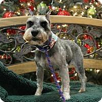 Adopt A Pet :: Beulah - Hilton Head, SC