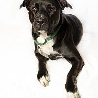 Adopt A Pet :: Maxine - Van Nuys, CA