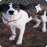 Adopt A Pet :: COOKIE - Norman, OK
