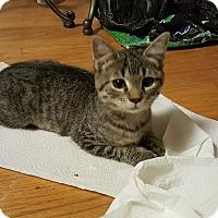 Adopt A Pet :: Char - Smithfield, NC