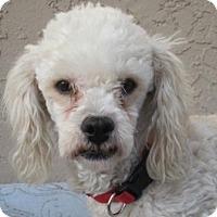 Adopt A Pet :: Sophie - Carlsbad, CA