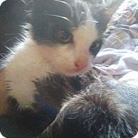 Adopt A Pet :: Bones - El Cajon, CA