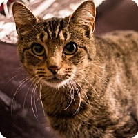 Adopt A Pet :: Tigger - New York, NY