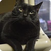 Adopt A Pet :: Rook - Germantown, TN