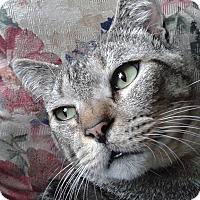 Adopt A Pet :: Lester - Ocala, FL