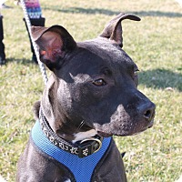 Adopt A Pet :: Wombat - Dayton, OH