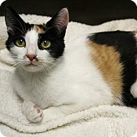 Adopt A Pet :: Figgy - Wayne, NJ