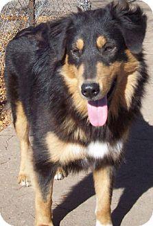 Collie Mix Dog for adoption in Minnetonka, Minnesota - LENA