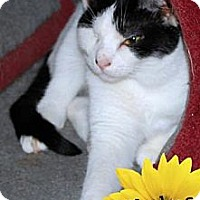 Adopt A Pet :: Thelma - River Edge, NJ