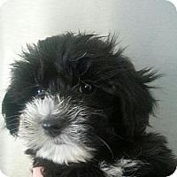 Adopt A Pet :: CHLOE - Silver Lake, WI