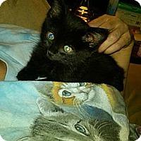 Adopt A Pet :: Dalia - Sterling Hgts, MI