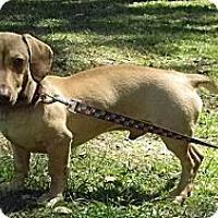 Adopt A Pet :: Alfie - Duluth, GA