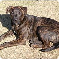 Adopt A Pet :: OZZY - Glenpool, OK