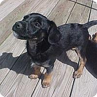 Adopt A Pet :: Niles - Fulton, NY