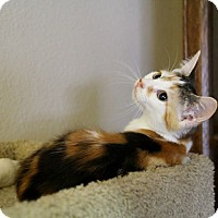Adopt A Pet :: Patches - Oviedo, FL