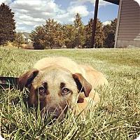 Adopt A Pet :: Sunny - Winchester, VA