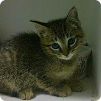 Adopt A Pet :: Tigger - Hamilton, ON