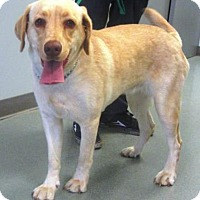 Adopt A Pet :: Rose - Columbus, IN