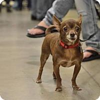 Adopt A Pet :: Axl Rose - Salt Lake City, UT