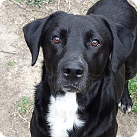 Adopt A Pet :: Jake - Glastonbury, CT